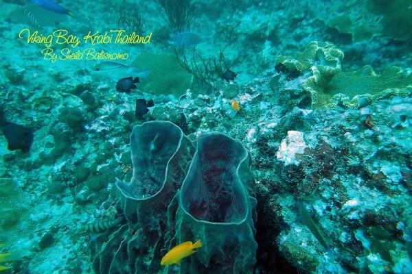 coral reefs at viking bay