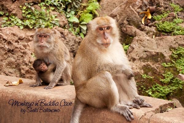 Monkeys in Buddha Cave