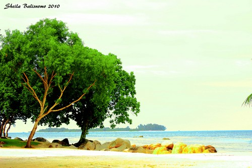 agro bintan beach