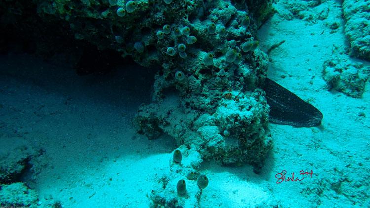 Eel in Coral Reef