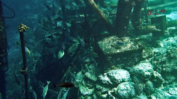 Fishes at Kurumba Island