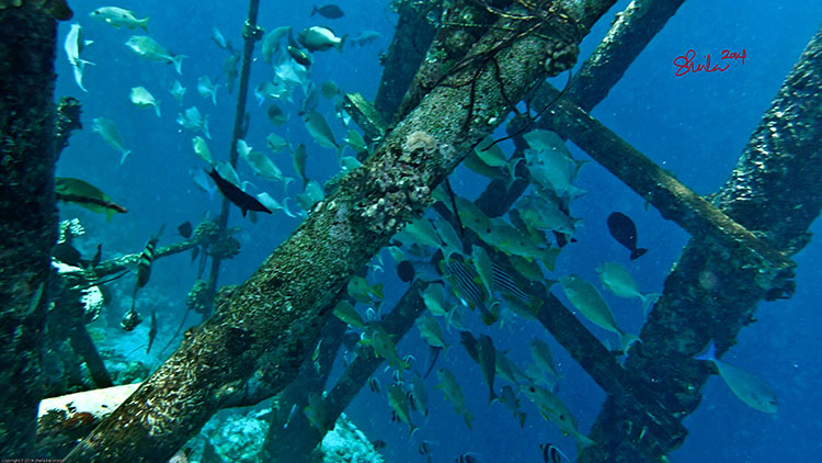 Fishes at Kurumba