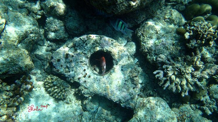 Kurumba Reef